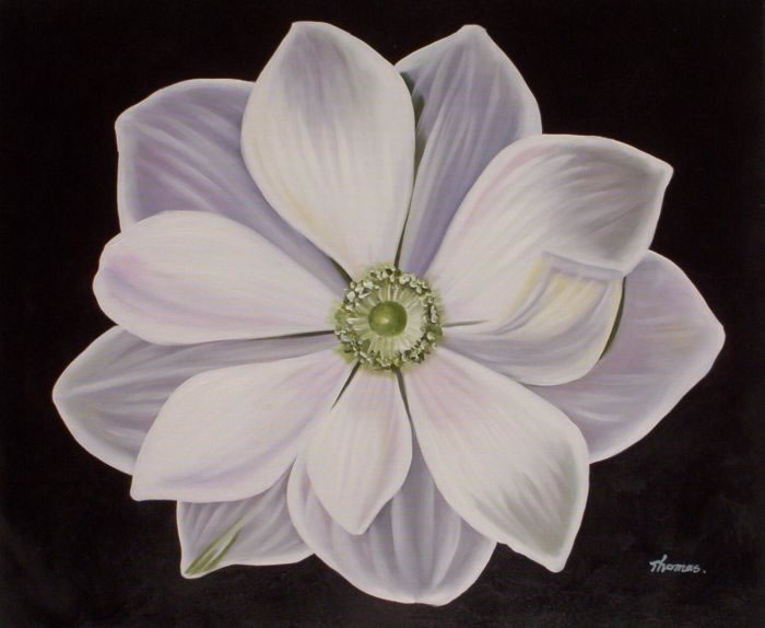 High Quality Flower Oil Painting #091:White Flower Floral Art