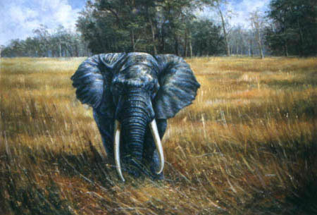 Animal Portrait Oil Painting #W002-661:Wildlife Safari Elephant
