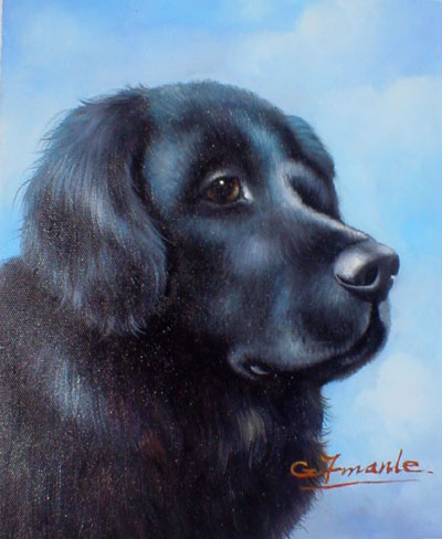 Animal Portrait Oil Painting #W020:Black Dog Portrait
