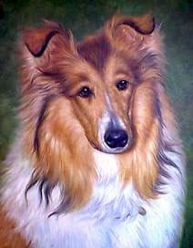 Animal Portrait Oil Painting #W023:Lassie Portrait Dog