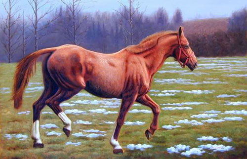 Animal Portrait Oil Painting #W040:Wildlife Brown Galloping Hors