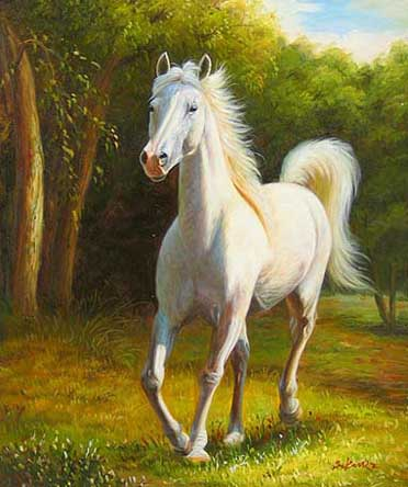 Museum Quality Oil Painting #CST-54:Animals White Arabian Horse
